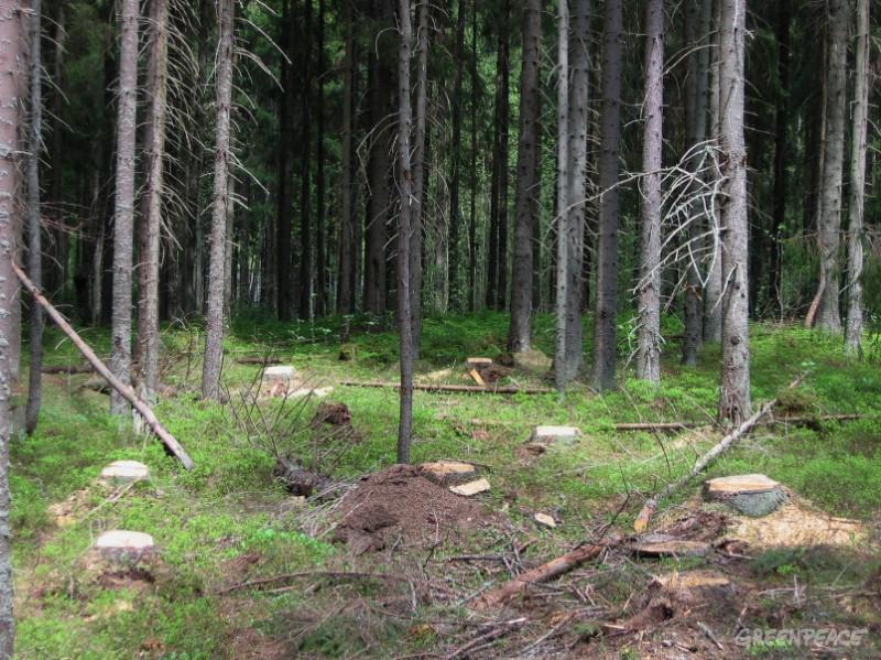 Читать  - лукьяненко сергей за лесом где подлый
